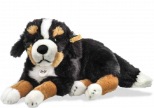 click to see Steiff Sigi Bernese Mountain Dog in detail