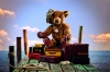 steiff bear 000997