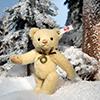 steiff bear 006364