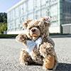 steiff bear 006531