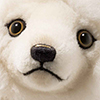 steiff bear 006661