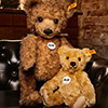 steiff bear 027796